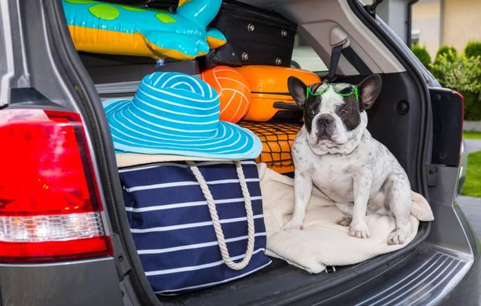 Die Fahrt im Auto ist für den Vierbeiner die verträglichste Art zu Reisen. (Foto: shutterstock - Patryk Kosmider)